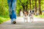 Promener des animaux